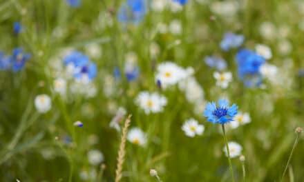 Zelený MAMApočin roku – píšete nám, co všechno děláte pro přírodu